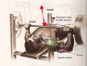 bench-press-hamiliton2