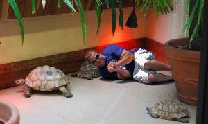smitty-sleeping-with-turtles